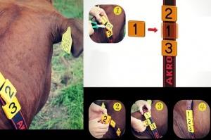 Łatwa i szybka numeracja bydła