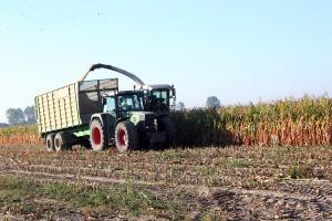 Kukurydza na kiszonkę w 2016 r. w badaniach COBORU
