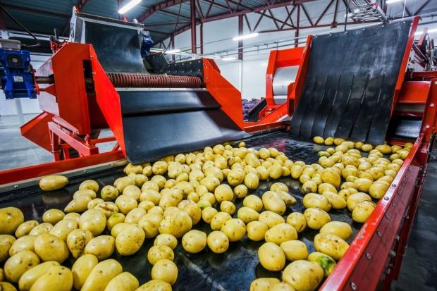 Producenci ziemniaków umiarkowanie optymistyczni, liczą na eksport i wzrost cen