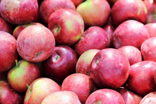 Silny wzrost eksportu jabłek napędza eksport owoców