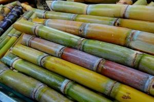 Brazylia: Zbiory trzciny cukrowej będą większe niż w poprzednim sezonie