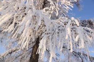 W środę początek astronomicznej zimy