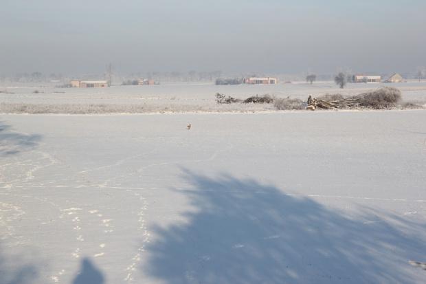 Śnieg – jaki jest dobry dla ozimin?