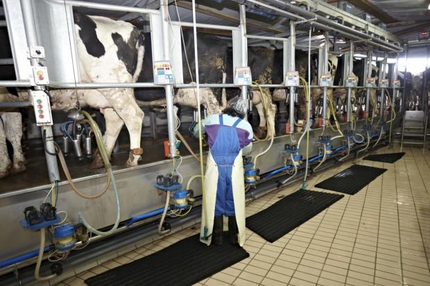 Niemcy: Kryzys mleczny uderzył w wielu rolników