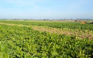 GUS: W 2016 większe zbiory zbóż, warzyw i owoców niż przed rokiem