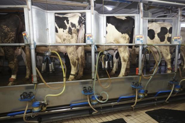 Niemcy: Gwałtowny wzrost cen skupu mleka surowego w październiku