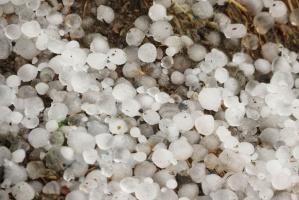 ARiMR przyjmuje wnioski o pomoc związaną z klęskami żywiołowymi