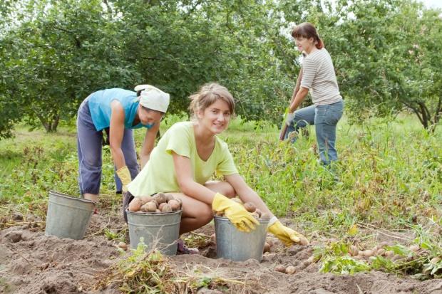 Pracownicy sezonowi. Jak zatrudnić pracownika z Ukrainy?