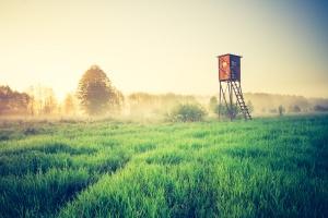 W 2017 roku szacowanie szkód i wypłat odszkodowań łowieckich - po staremu