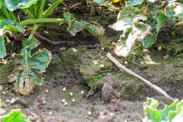 Wykorzystanie przez rośliny składników mineralnych z nawozów