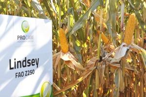 Ważne cechy kukurydzy