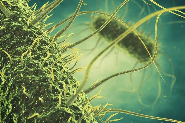 Chroń stado przed salmonellozą