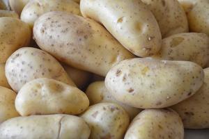 Rosja: Rekordowy eksport ziemniaków