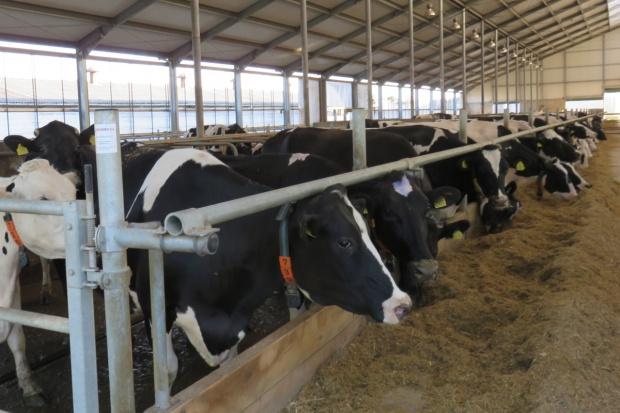 Wnioski o płatność za redukcję dostaw mleka – do połowy lutego