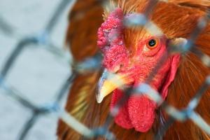 Nowe przypadki grypy H5N8 u dzikiego ptactwa we Włoszech i Hiszpanii