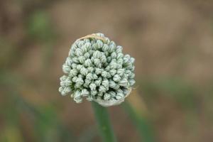 Uprawy na nasiona nie muszą być ubezpieczone?...