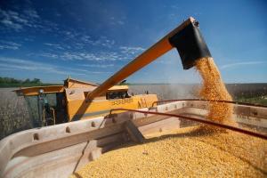 Jedynie kukurydza na giełdzie w Paryżu podrożała