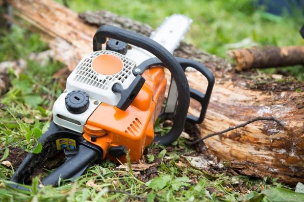Nowe zasady usuwania drzew i krzewów z prywatnych działek