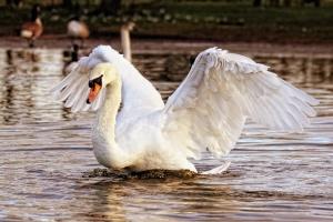 Kolejne ogniska ptasiej grypy w Europie
