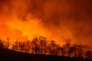 Chile: Katastrofalne pożary lasów wciąż szaleją