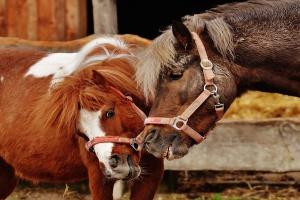 KE tworzy nową platformę dla dobrostanu zwierząt