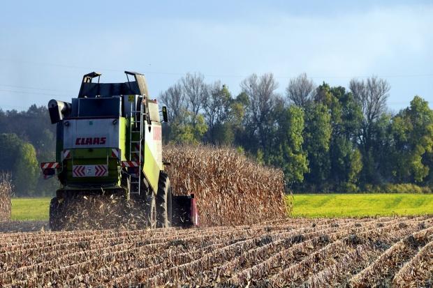 Na Ukrainie zebrano 26 mln ton ziarna kukurydzy