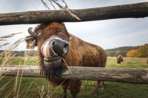 Potentaci medialni mają w USA... najwięcej ziemi i bizonów