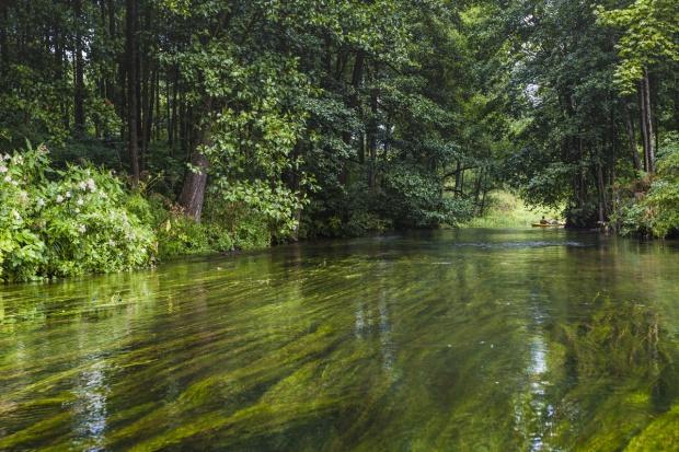 Warmińsko-mazurskie: Ponad 8 mln zł na ochronę różnorodności biologicznej