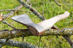 Kiedy rolnik wytnie drzewo bez zezwolenia