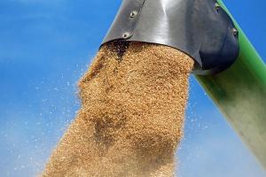 Ukraina: Rekordowe zbiory zbóż i słonecznika
