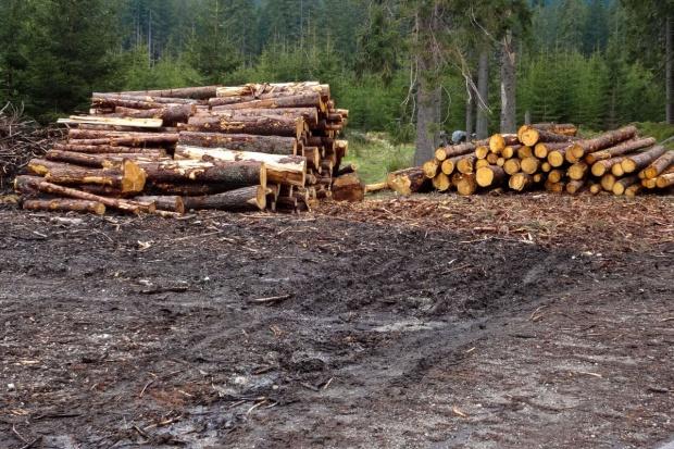 Podkarpackie: Leśnicy sprzedadzą w tym roku ok. 1 tys. m sześc. drewna