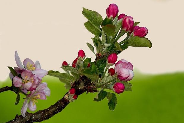 Płatność ekologiczna także do nieowocujących drzew i krzewów