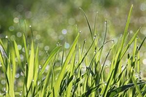 """Zmiany w """"Rolnictwie ekologicznym"""" z PROW"""