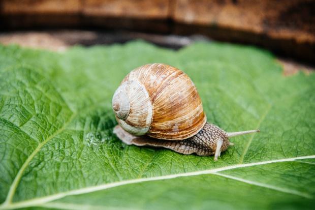 Czy produkcja ślimaków nadal się opłaca?