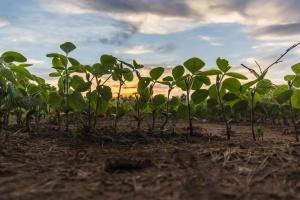 Na Ukrainie coraz popularniejsze rolnictwo ekologiczne