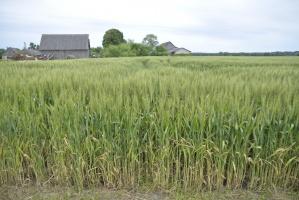 Sejm uchwalił ustawy powołujące Krajowy Ośrodek Wsparcia Rolnictwa