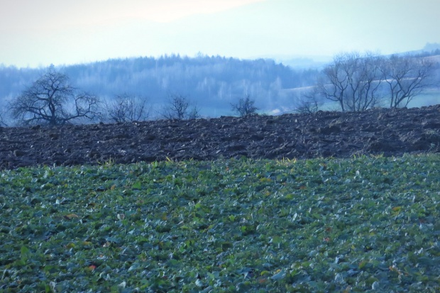 Ziemia rolna fot. AP 1200x800.jpg
