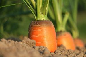 UE: Niepewne zaopatrzenie w warzywa