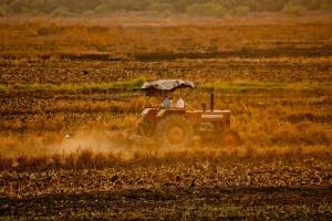 Rośnie światowa produkcja rolnictwa ekologicznego