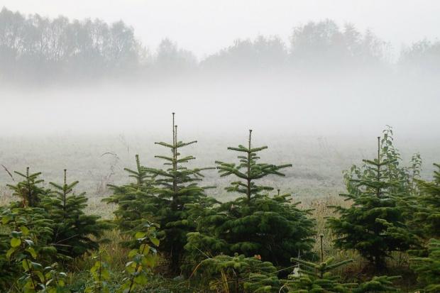 MŚ: W Polsce rocznie wycina się ok. 1 mld drzew, sadzi ok. 30 razy więcej
