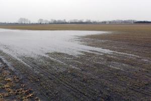 Zastoiska wody ponownie zagrażają oziminom