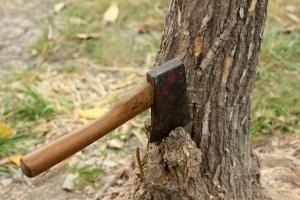 PO: obawiamy się, że pierwszym lobbystą ws. wycinki drzew jest minister Szyszko