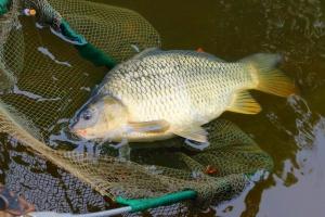Hodowcy ryb słodkowodnych starają się o przywrócenie dopłat wodno-środowiskowych