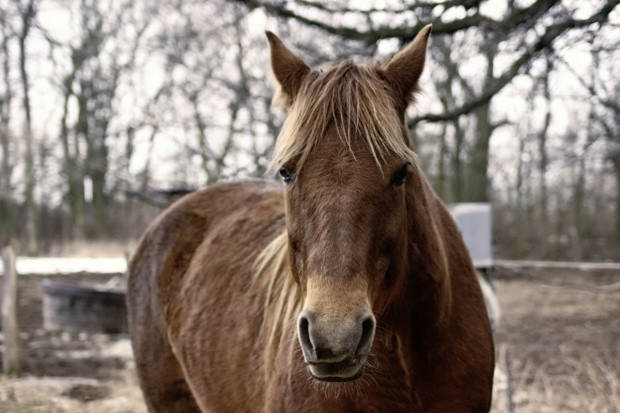 """Mazowieckie: Obrońcy praw zwierząt planują wykup koni na """"Wstępach"""" w Skaryszewie"""