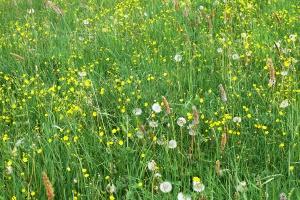 Produkcyjne i środowiskowe skutki zakwaszenia gleb