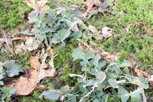 Nadrobić zaległości z jesieni