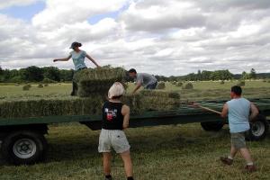 Jak się pracuje sezonowo w rolnictwie w Polsce i w innych krajach?