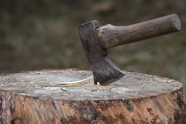 Będzie uściślenie zasad wycinki drzew dla rolników