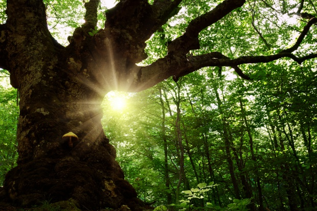 Bielski Klub Gaja chce leczyć najcenniejsze drzewa w Polsce