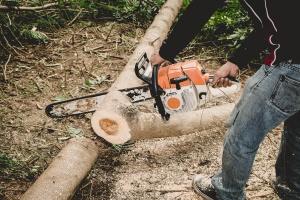 Wycinka drzew w Łebie nielegalna